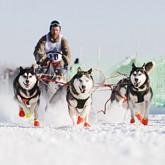 В Костроме появится хаскодром для гонок на собачьих упряжках