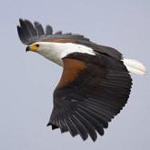 Заботы об орланах и других птицах