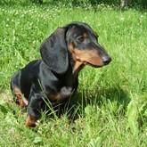 Выставки охотничьих и других собак в августе (ВИДЕО)