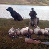 Охотничьи жеребьевки в Башкирии и Нижегородской области