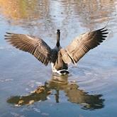 Новости охоты и рыбалки в конце августа 2011