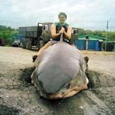 Приморское мошенничество и подложные акулы