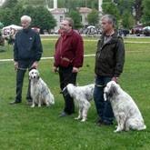 Выставки и испытания охотничьих собак в сентябре