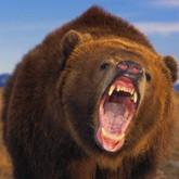 Новости о бурых и белых медведях (ВИДЕО)