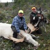 Белый лось: Должны ли охотники отстреливать альбиносов?