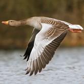 28 сентября - старинный праздник охотников на гусей