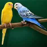 Новости о птицах в начале октября 2011