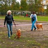 Выставки охотничьих собак и другие новости о собаках