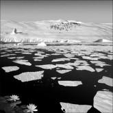 Животные мельчают из-за климата, Арктика растает через 10 лет
