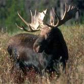 Открытие охоты на копытных и другие новости