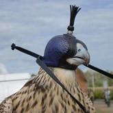 Всероссийские состязания ловчих птиц по голубю на кубок КСР Ветер перемен