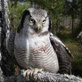 Спасение совы и кречетов. Новости о птицах