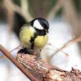 12 ноября в Москве прошел день перелетных птиц