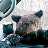 Рыбаки мешают сахалинским медведям лечь в спячку (ВИДЕО)