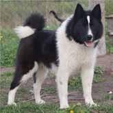 Новости об охотничьих и ездовых собаках. Ноябрь 2011