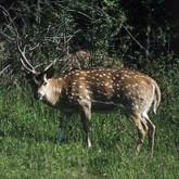 99 пятнистых оленей проследовали на поезде в Тверскую область