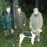 Состязания собак гончих пород в Псковской области