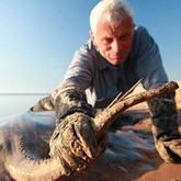 Джереми Уэйд поймал самого большого пресноводного ската в мире