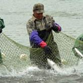 Новости рыбалки и охоты. Середина декабря 2011