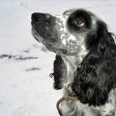 Семинар для владельцев молодых собак секции МООиР в Долголуговском