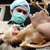 Онищенко запретил туристам прикасаться к гриппозным птицам