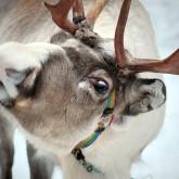 Новости охоты, туризма и отдыха в начале 2012 года