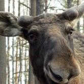 Новости охоты и дикой природы в первую неделю 2012 года (ВИДЕО)