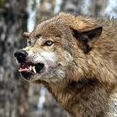 Новости охоты. Середина января 2012