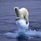 Аномальное глобальное потепление - Ледниковый период откладывается