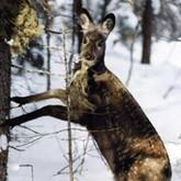 WWF вложил 1,3 млн руб в малый бизнес Алтая для борьбы с браконьерами