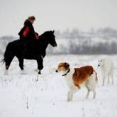 Особенности современной псовой охоты: реконструкция Першинской охоты