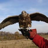 Показ хищных птиц в Москве и другие новости из музеев
