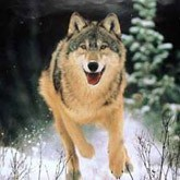 Новости охоты и рыбалки в конце января 2012