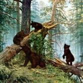 Тайна Мишки косолапого. Новости о медведях