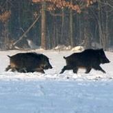 Новости охоты. Конец января 2012