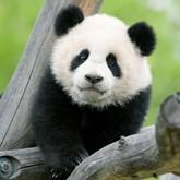 Новости зоопарков. Начало февраля 2012