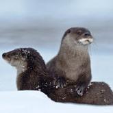 Охотничьи новости: Учет диких животных в регионах страны