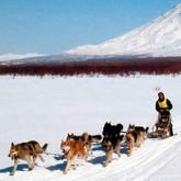 Гонки на собаках: Yukon Quest, Берингия 2012, и другие (ВИДЕО)