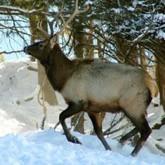 Подкормка диких животных. Новости из регионов