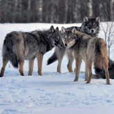 Новости из мира охоты в конце февраля 2012