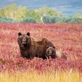 Камчатские медведи станут героями французского фильма