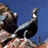 Соревнования по бердингу и другие новости о птицах