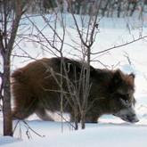 Новости охоты и охотничьего хозяйства. Февраль 2012