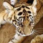 Новости дикой природы в феврале 2012