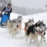 Гонки на ездовых собаках: итоги и анонсы (ВИДЕО). Февраль 2012