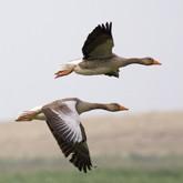 Новости охоты в начале марта 2012