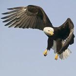 Новости о соколиной охоте и птицах