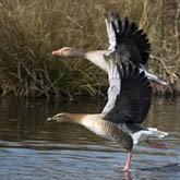 Новости охоты и охотничьего хозяйства. Март 2012