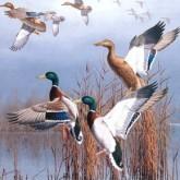 Новости охоты и рыбалки. Март 2012