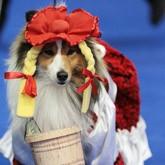 В Москве прошла крупнейшая выставка собак Евразия-2012 (ВИДЕО)